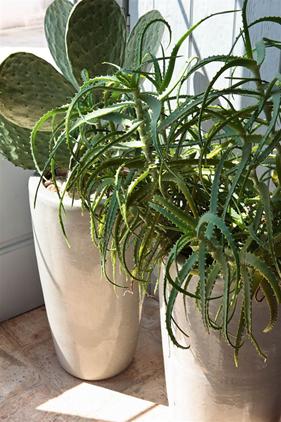Las plantas en la decoración